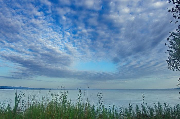 Lake Of Constance Beauty In Nature Blue Bodensee Cloud - Sky Day Grass Horizon Over Water Lake Marram Grass Nature No People Outdoors Scenics Sky Tranquil Scene Tranquility Water