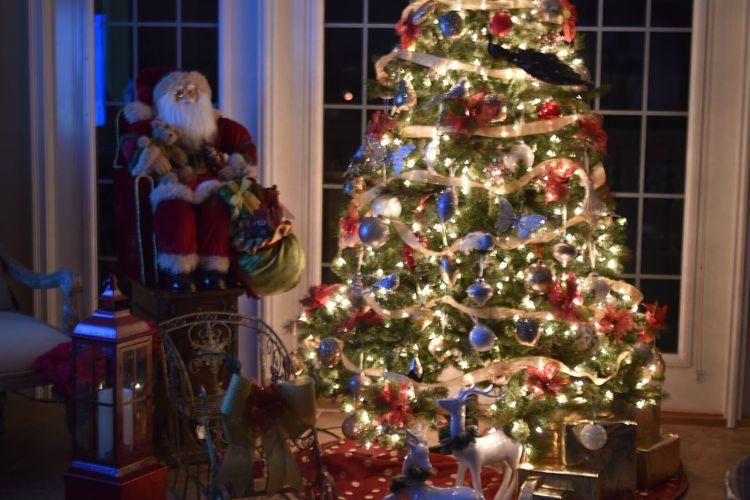 EyeEm, Christmas, Christmas tree, holiday, Christmas cheer, decorations