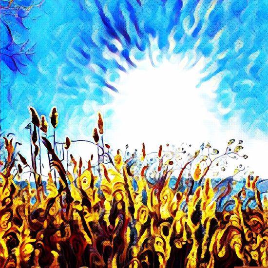Oakland Beach Sunshine 😎 Hello World