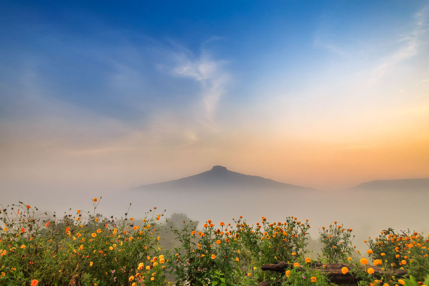 Sunrise and The Mist , Landscape at Phu Hor , Loei Province,Thailand Blackground Country Fresh Color Heaven Morning Beauty In Nature Colorful Countryside Flower Fog Landscape Milky Way Mist Misty Morning Mountain Nature No People Outdoors Paradise Sky Star Sunrise Tranquil Scene Tranquility Wallpaper
