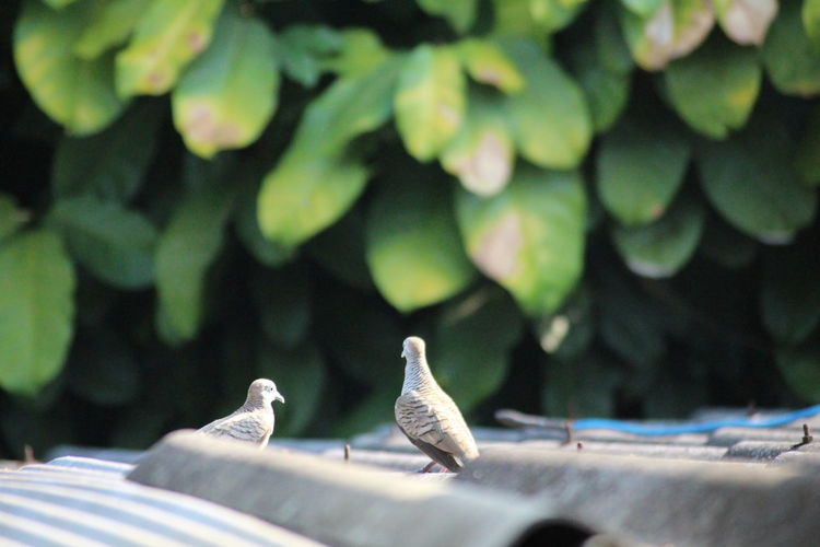 Close-up of birds perching on leaf