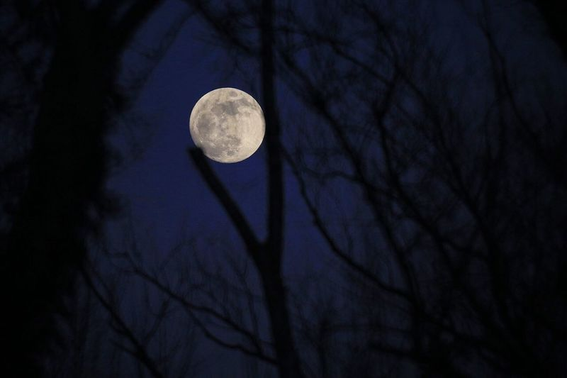 Blue blody full moon Full Moon Blody Moon Blue Moon Super Moon Moon Bare Tree Tree Branch Circle Low Angle View Astronomy Night Nature Beauty In Nature Tranquility Sky