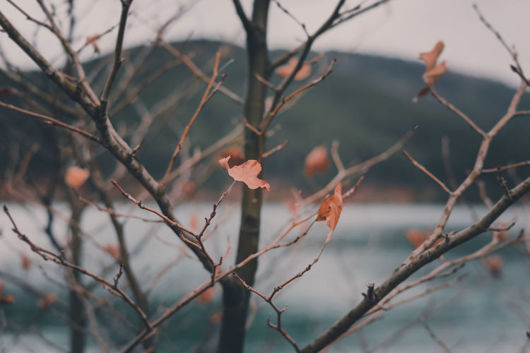 Close-up of tree against blurred background