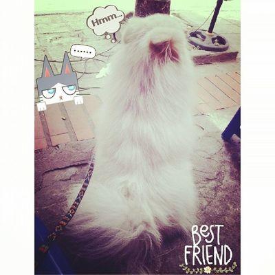 Pet Dog Mylove Lovely Missyou