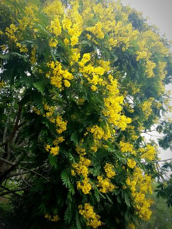 Yellow No People Close-up Nature Tree Backgrounds Beauty In Nature Day Fragility Outdoors Yellow Color