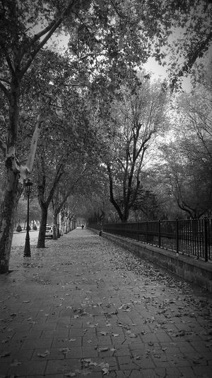 Empty footpath amidst trees in park during autumn