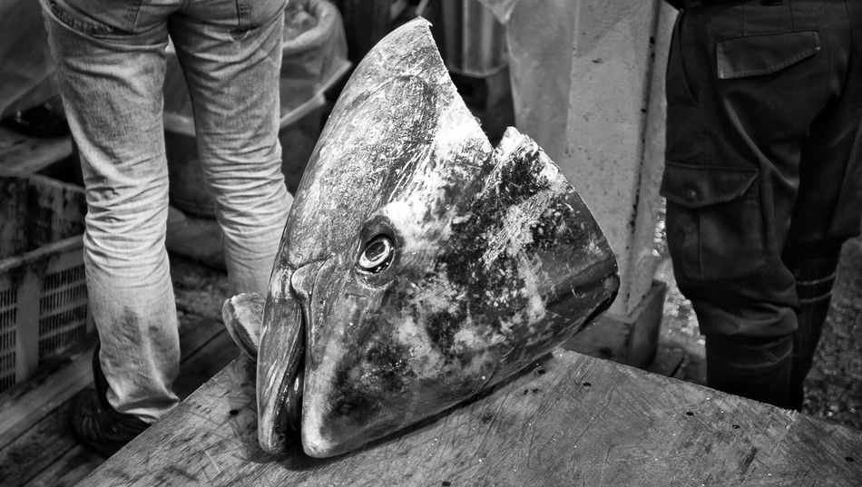 Adult Animal BIG Big Head Black And White Day Dead Plant Environmental Issues Fish Head Fish Monger FishMarket Giga Fish Grey Human Leg Indoors  Industrial Low Section Men Outdoors People Real People Slaughter Tuna Tunafish
