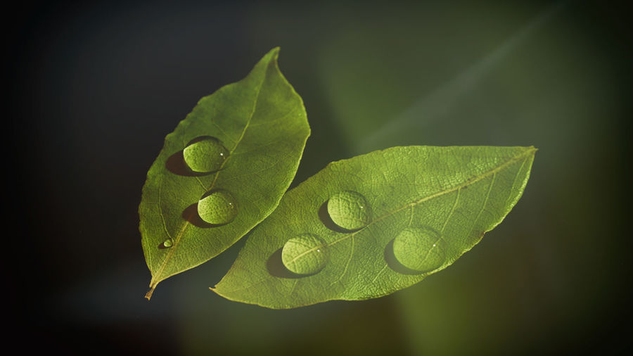 Double Exposure Drops Exceptional Photographs EyeEm Best Shots EyeEm Nature Lover EyeEm Gallery Leafs Nature Photography Water Droplets Water Drops Beauty In Nature Black Background Close-up Droplets Eye4photography  Freshness Green Color Leaf Leaves Nature Nature_collection Photography