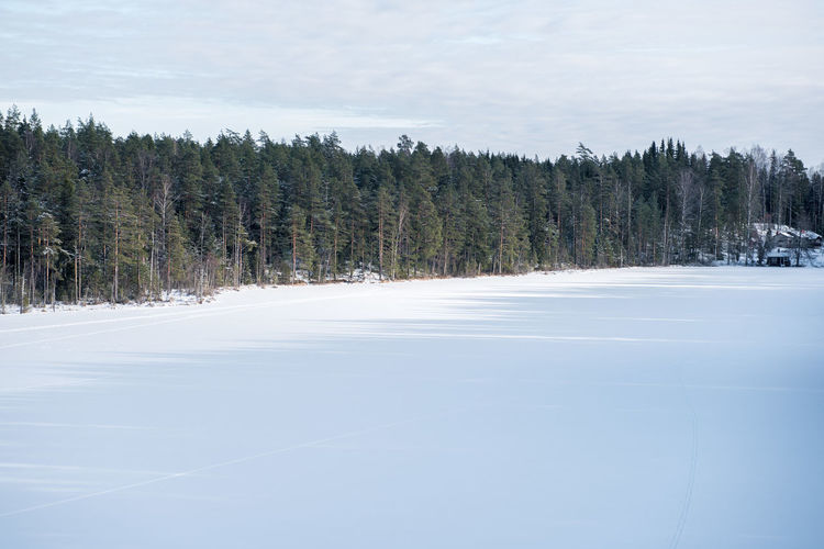 Beauty In Nature Cold Cold Temperature Coniferous Tree Day Evergreen Tree Finland Frozen Helsinki Hiking Landscape Nationalpark Nature No People Nuuksio Outdoors Scenics Sky Snow Tree White Color Winter Winter
