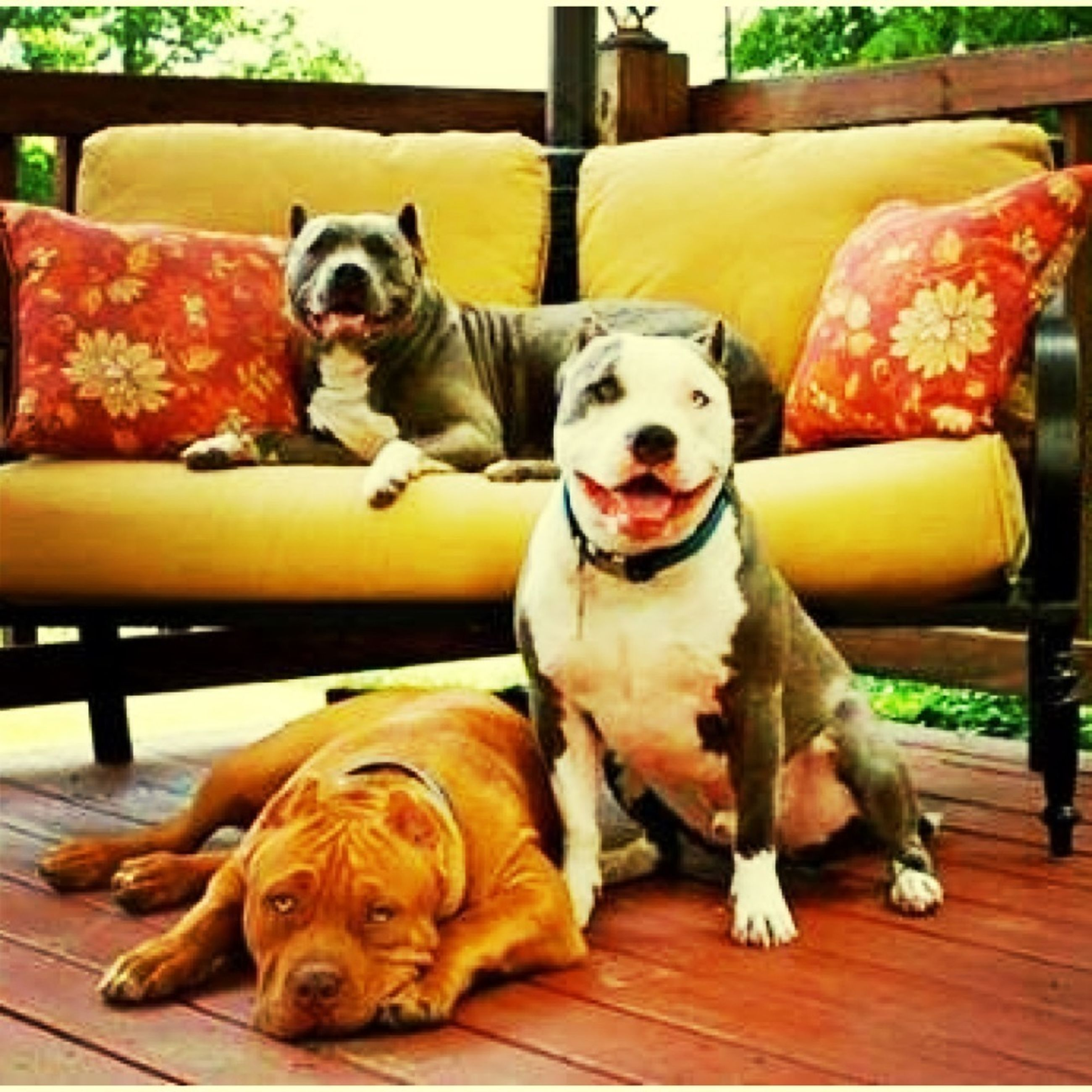 pets, domestic animals, mammal, animal themes, dog, indoors, one animal, relaxation, portrait, looking at camera, resting, two animals, sitting, lying down, table, chair, sofa, no people, home interior, relaxing