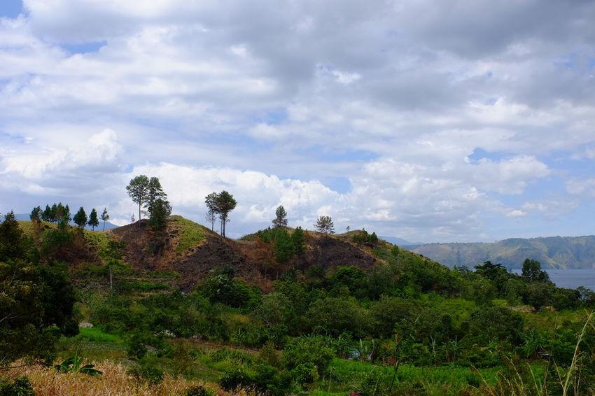 Walking Around Travelling INDONESIA Tree Rural Scene Beauty Field Sky Landscape Cloud - Sky