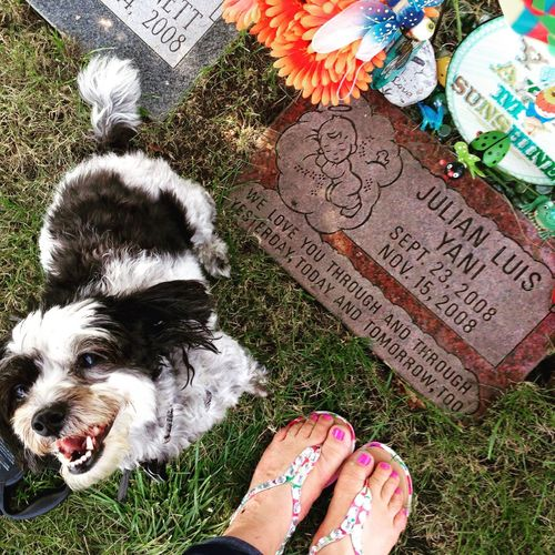 Text Pets Communication Animal Themes Mammal Outdoors Day Domestic Animals One Person Low Section Cemetery Photography Puppy Face Childloss Infant Loss Awareness Infant Loss Sandals Love Family Baby Julian Resist