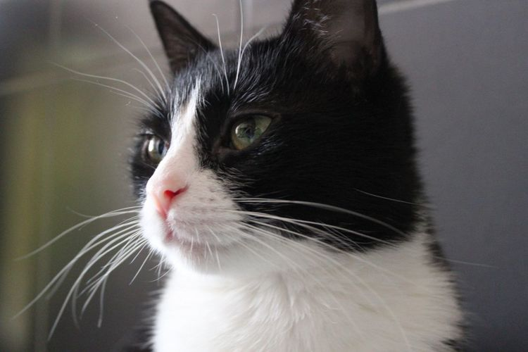 Domestic Cat Pets Domestic Animals One Animal Animal Themes Mammal Animal Body Part Close-up Indoors  Feline No People Day