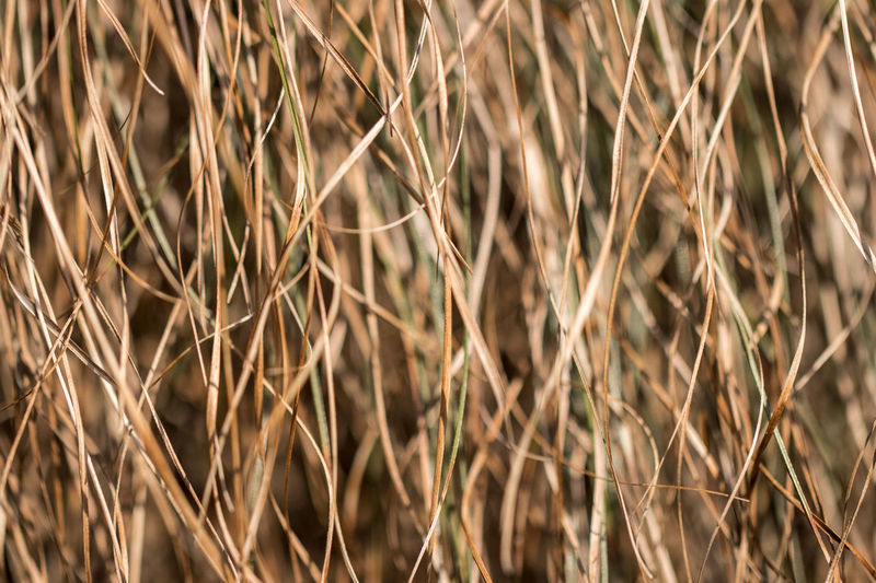 stripes from the plants in the nature EyeEm Best Shots EyeEm Nature Lover Nature Nature Photography Stripes Agriculture Background Backgrounds Beauty In Nature Cereal Plant Close-up Day Full Frame Grass Growth Nature Naturelovers No People Outdoors Plant Stripes Pattern Structure Structure And Nature Structures Wheat