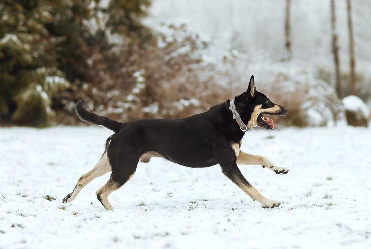 Dog on snowy field