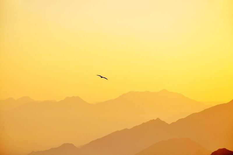 Freedom Mountain Beauty In Nature Nature Sunset Mountain Range Silhouette Flying Scenics Outdoors Mid-air Tranquil Scene Bird No People Tranquility Clear Sky Sky Animals In The Wild Animal Themes Day Week On Eyeem EyeEm Selects Sunrise Bird Flying Landscape EyeEm Best Shots