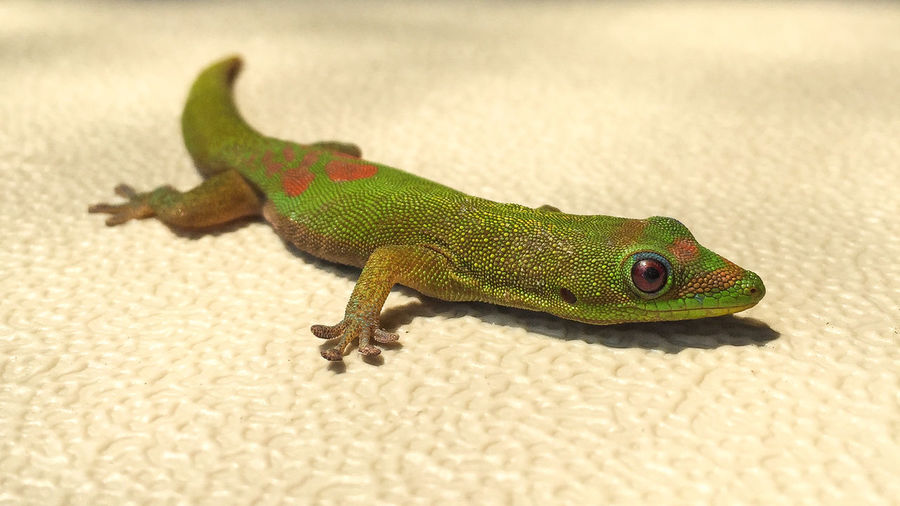 Close-Up Of Gecko On Sunny Day