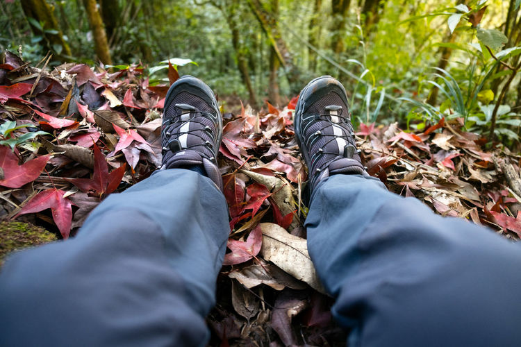Low section of man sitting on autumn leaves in forest