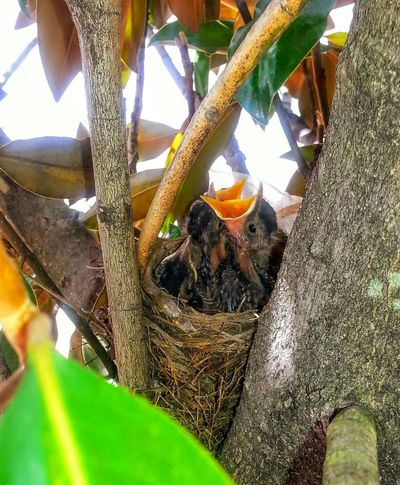 Baby Birds Springtime Nature Bird Photography Birdwatching Nesting Nature_collection Feed Me Wildlife Let It Be