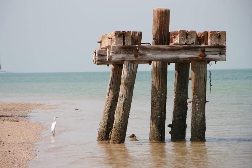 Seaside EyeEm Selects Water Sea Beach Bird Clear Sky Sky Horizon Over Water