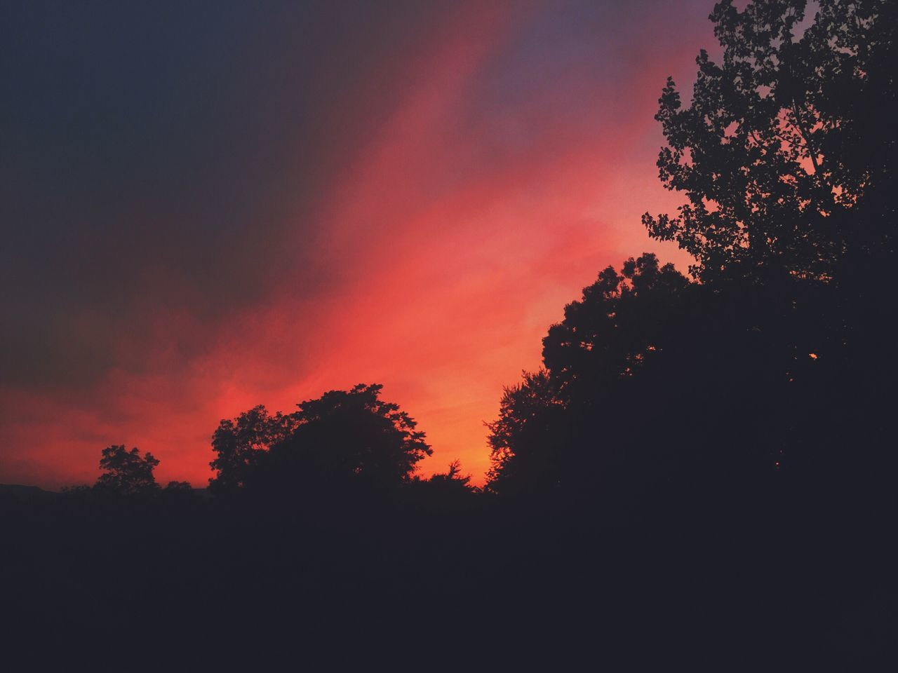 tree, sunset, silhouette, beauty in nature, nature, tranquility, tranquil scene, scenics, no people, dark, sky, outdoors, growth, day