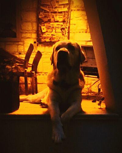 Dogs Pets One Animal Animal Dog Dog Love Cool Coolanimals Pose Animal Themes Domestic Animals Underlights Enjoying Life Relax Time
