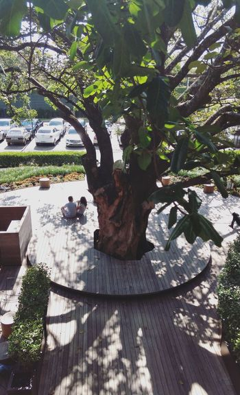Tree Shadow Day Sunlight Nature Plant Starbucks Coffee