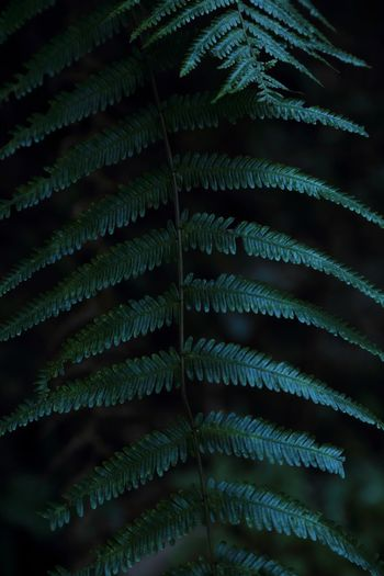 Streetphotography Eos5dmarkiii Leaf Fern Green Color Growth Fragility Close-up Nature No People Night Beauty In Nature Plant Frond Indoors  Palm Tree Freshness