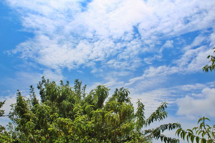 Cloud - Sky Green Color Beauty In Nature No People Blue CanonT6
