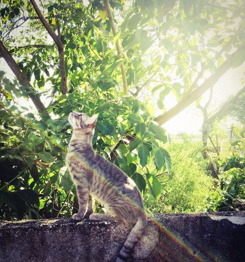 Looking At View One Animal Day Nature Outdoors Green Color Cat Domestic Cat Asombrado Landscape