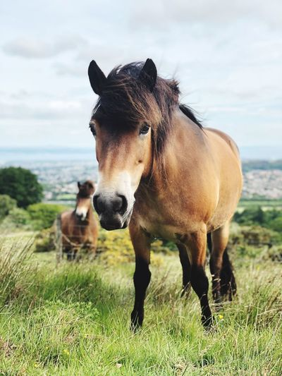 Portrait Of Horse Standing On Grassy Field Against Sky