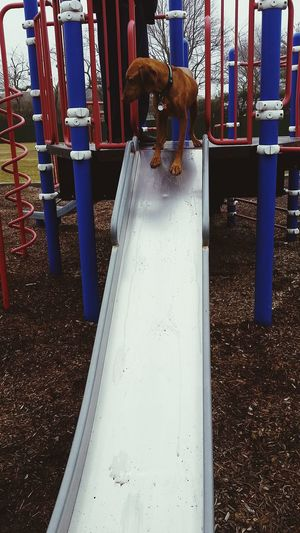 On The Move At The Park My Dogs Are Cooler Than Your Kids My Dog Dog Slide Park