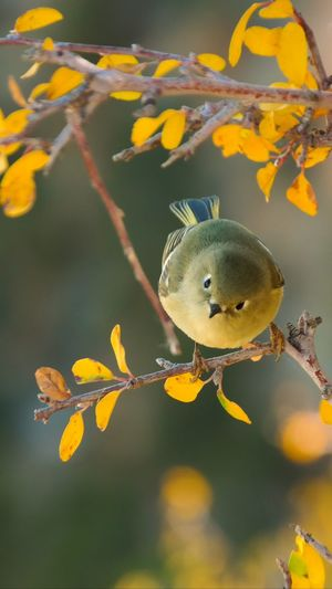 Close-up of a bird on branch