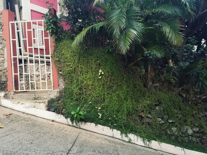Outdoors Green Color Nature El Salvador South America Town Life Village Life Tropical Day Architecture Building Exterior No People Built Structure Growth Ivy Tree First Eyeem Photo