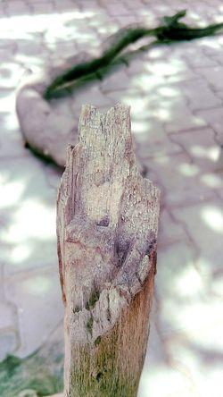Wood SSClickPics SSClickpix SSClicks Ssclix Close-up