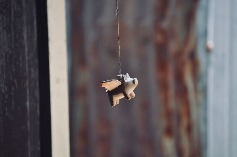 Close-up of little pig made from wooden hanging against wall