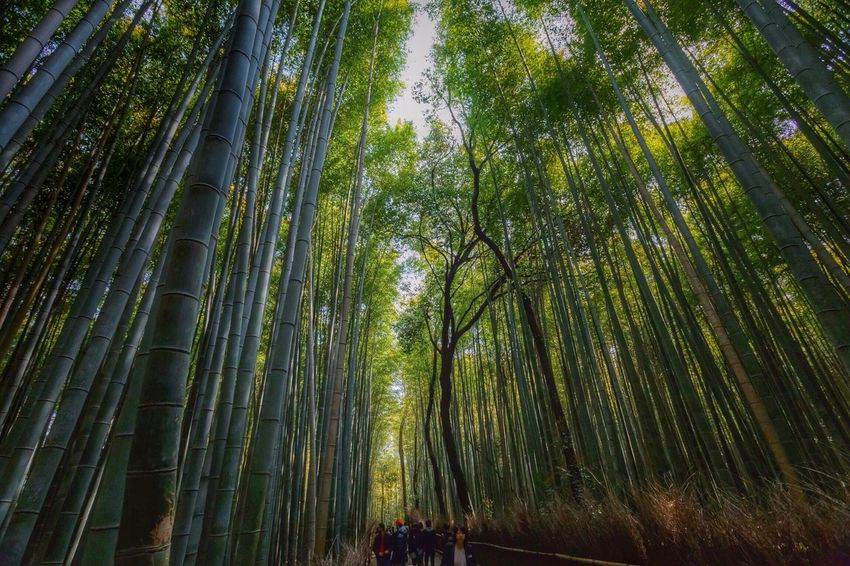 EyeEm Nature Lover TreePorn Nature Bamboo