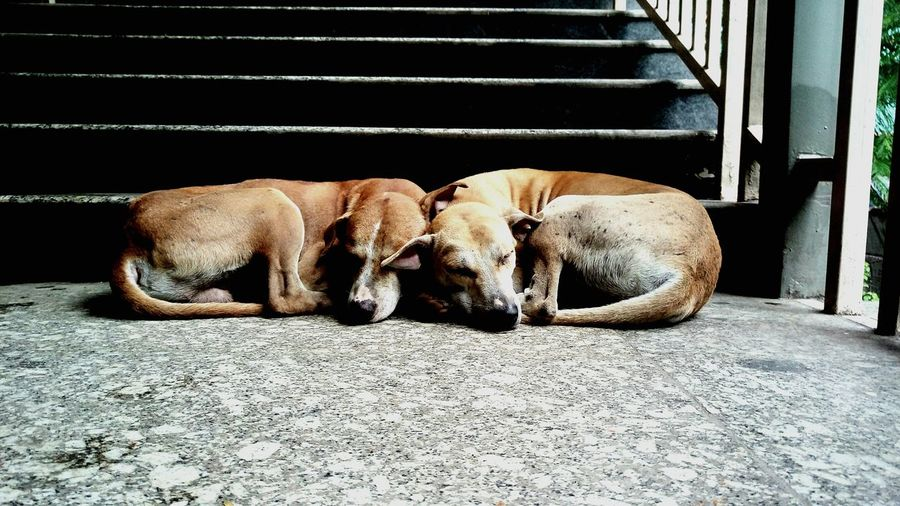 I consider myself pretty lucky to get a shot like this. Taking Photos Check This Out Animals Dog Dog Love Love Photography Taking Photos Walking Around Mumbai Mammal Couple Check This Out