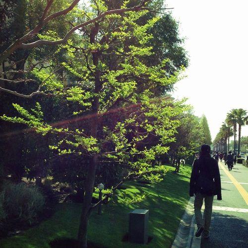 Trees Leaves Sunlight