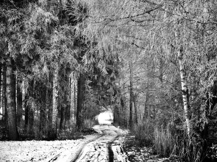 Das Ende des Tunnels Cold Winter ❄⛄ Frost Kälte Landscapes Nature No People Schnee Schwaben Tree Winter Trees Winterwald