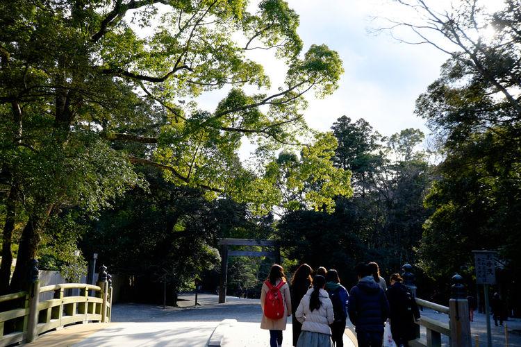 Fujifilm Fujifilm X-E2 Fujifilm_xseries Ise Grand Shrine Ise Jingu Japan Japan Photography Japanese Culture Outdoors Pinetree Religion Shrine Tree Xf10-24mm お伊勢さん 伊勢神宮 伊勢神宮内宮 松 神社