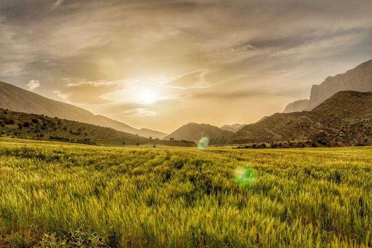 Scenic view of grassy landscape and mountains at sunset