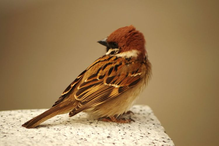 Perspectives On Nature One Animal Animal Themes Animals In The Wild Animal Wildlife Bird No People Close-up Full Length Portrait Nature Perching Day Outdoors Sparrow