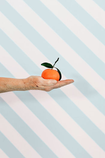 Senior female hand holding a tangerine fruit. third age ealthy food and lifestyle concept