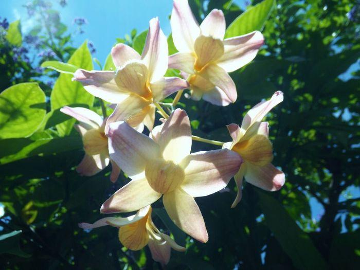 Orquídea Meu Jardim Bomdia