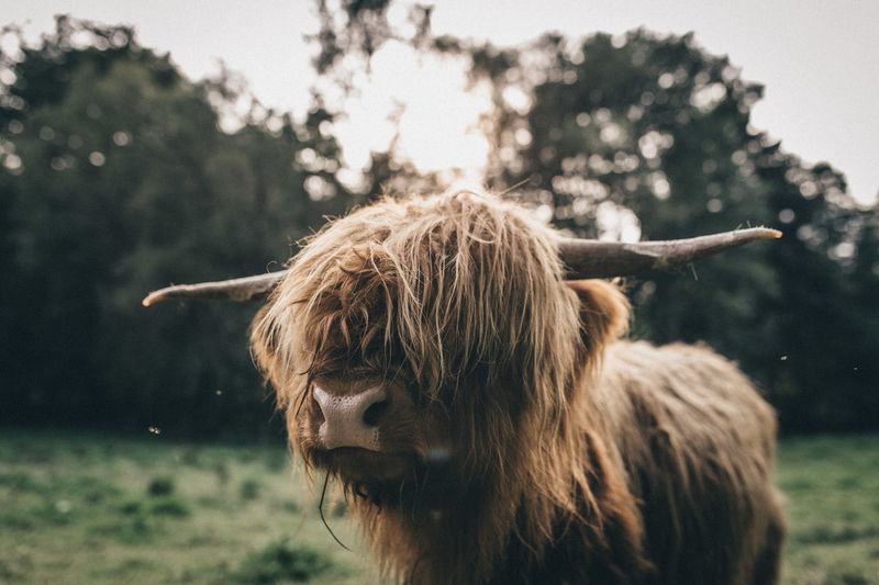 Animals In The Wild Cute Pets Fall Beauty Fall Colors Nature Photography Animal Themes Animals Cute Day Domestic Animals Fall Livestock Mood Moody Nature Nature_collection Naturelovers No People Outdoors Pet Portraits