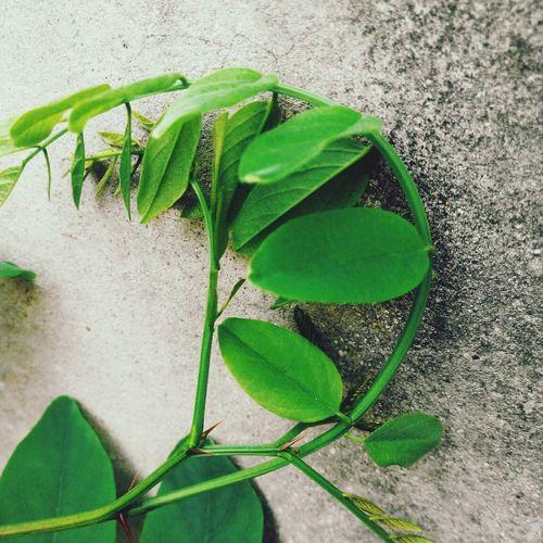 In China Guiyang Small Color 清新的绿 生命