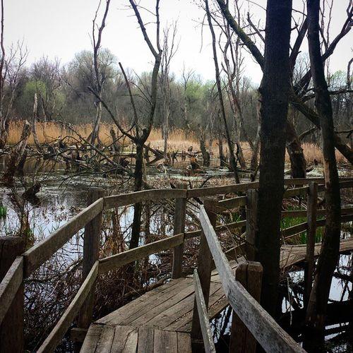 Hodmezovasarhely Martely Dead Tree Deadtree Bridge Tisza Backwaters Sluice Reed River