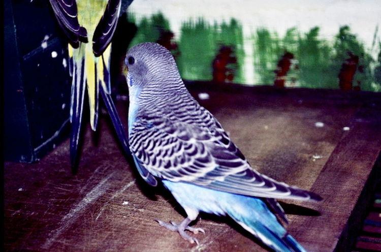 Ancient Pirico Animal Animal Body Part Animal Head  Animal Photography Animal Wildlife Animals Oiseau Oiseaux