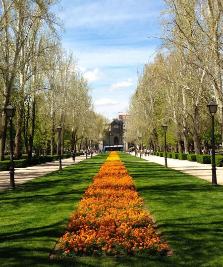 Garden Madrid Flowers Trees
